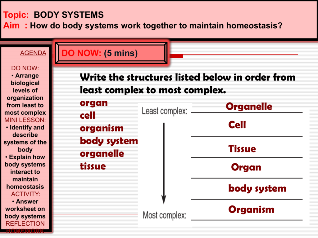 Interactions Of Body Systems Worksheet Answers