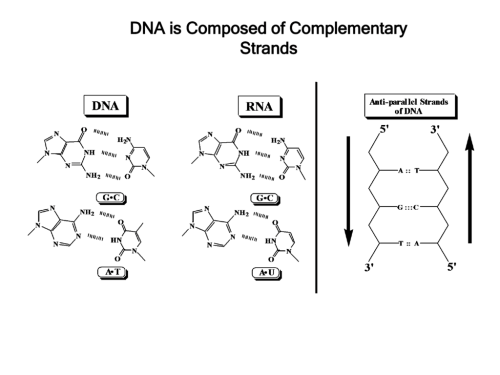 small resolution of dna is composed of complementary strands base pairing is determined by hydrogen bonding same size forces stabilizing dna double helix 1