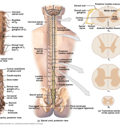 spine diagram canal [ 1024 x 768 Pixel ]