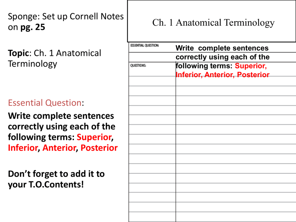 Uncategorized Anatomical Terminology Worksheet