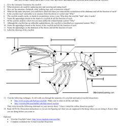 crayfish diagram labeled [ 791 x 1024 Pixel ]