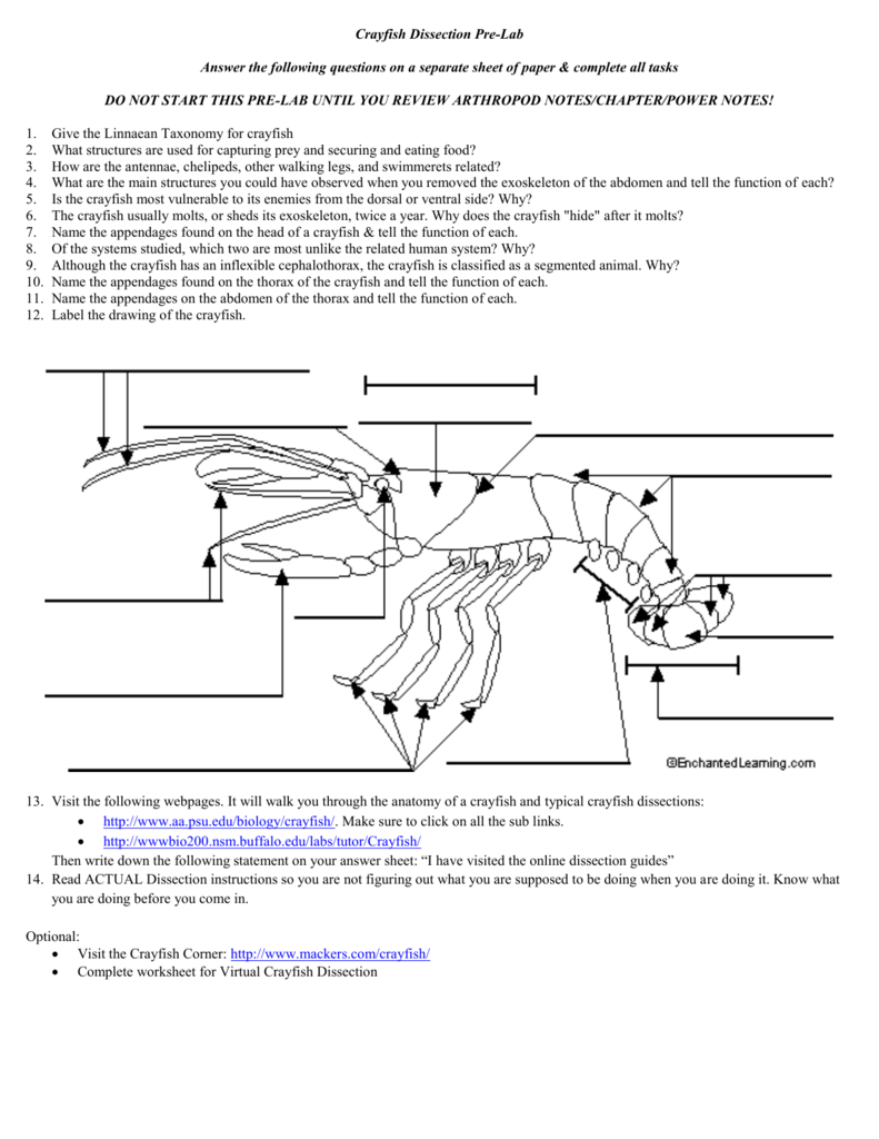 medium resolution of crayfish diagram labeled