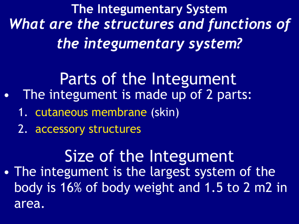 Chapter 5 The Integumentary System