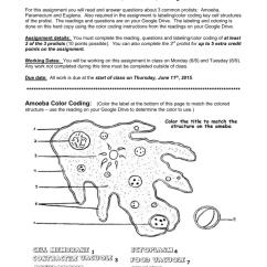 Euglena Cell Diagram With Labels Alpine V12 Amp Wiring Amoeba Color Coding