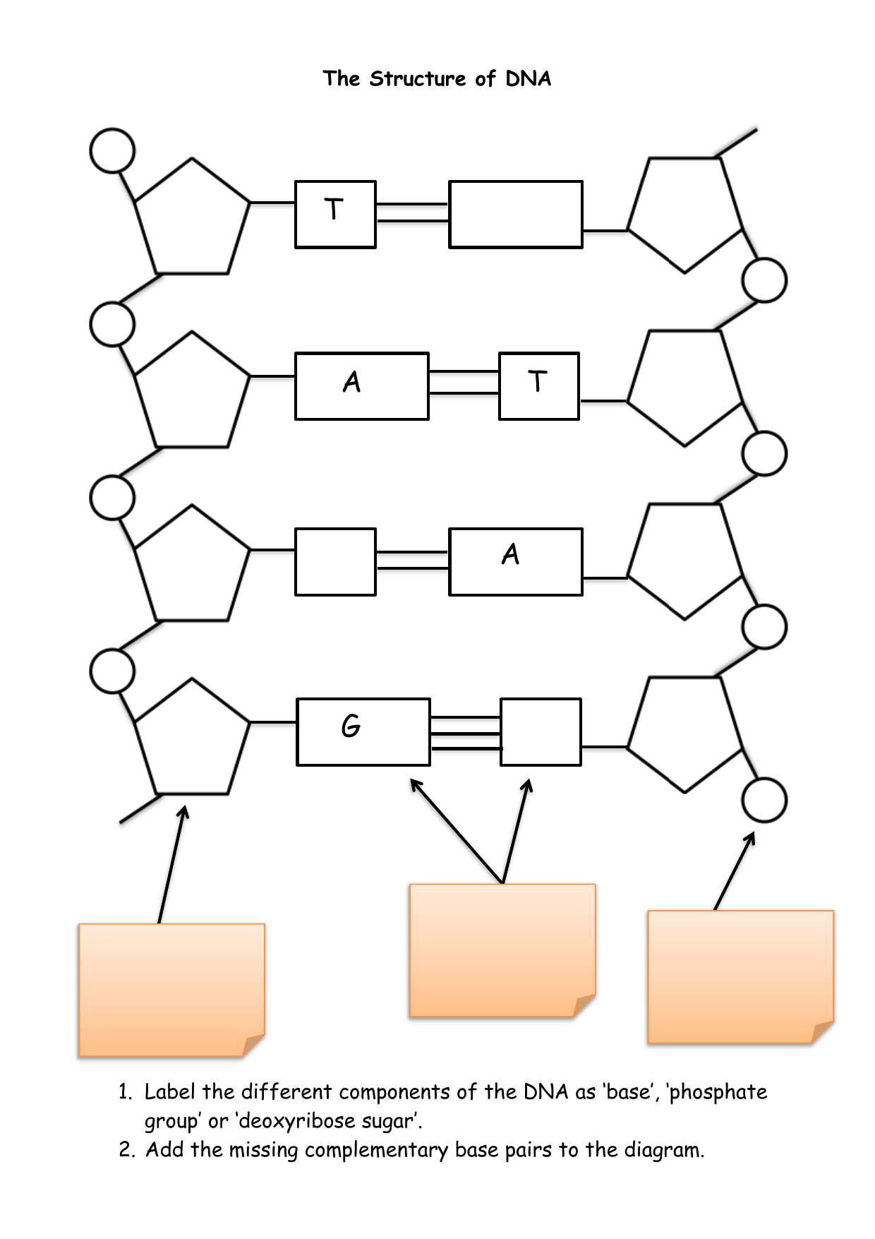 hight resolution of the structure of dna complimentary dna base diagram