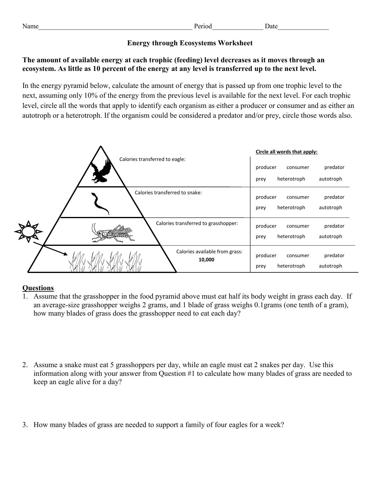 hight resolution of energy through an ecosystem worksheet