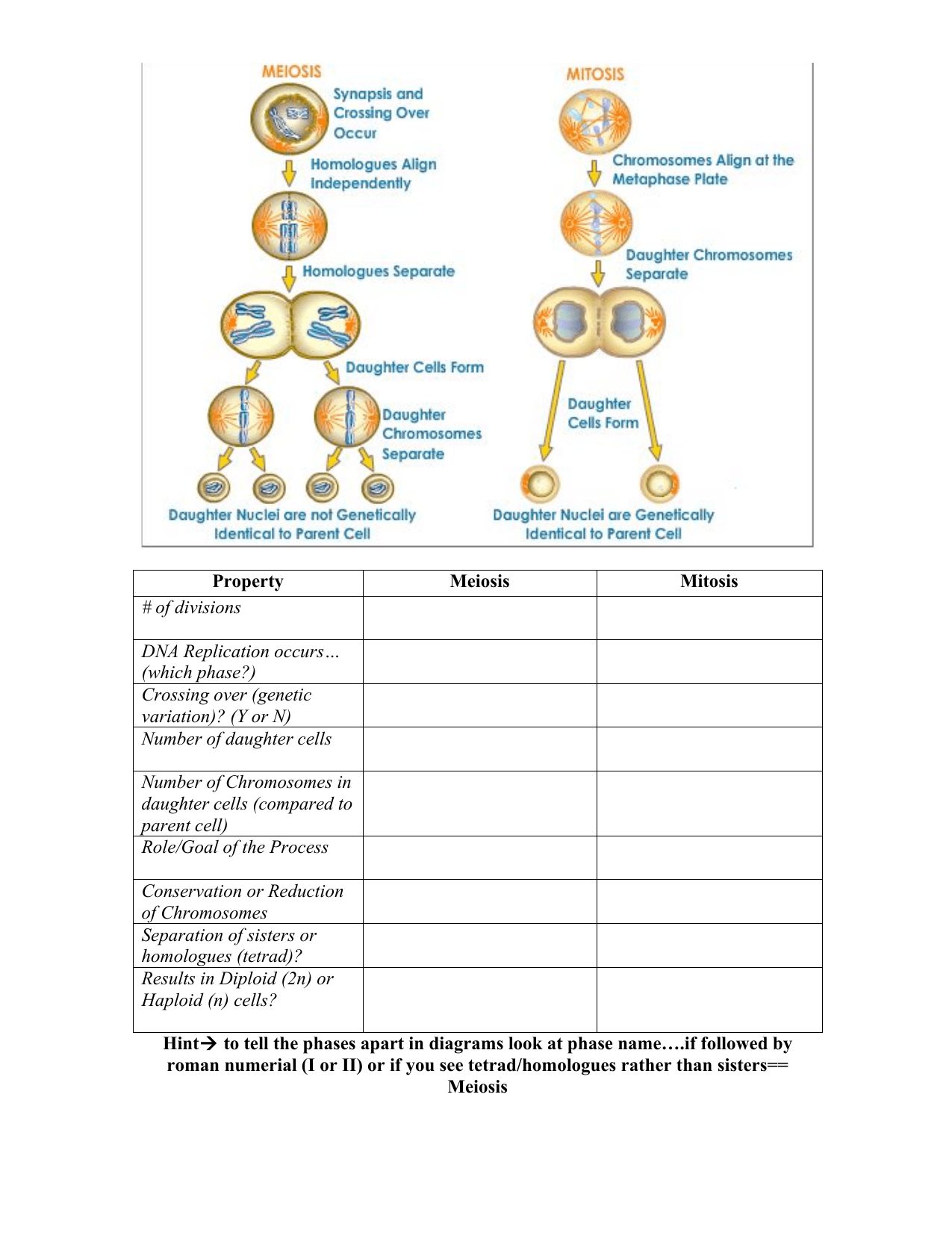 Mitosis Meiosis Comparison