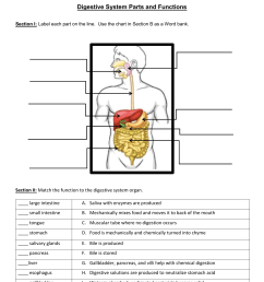 Digestive System Parts and Functions [ 1651 x 1275 Pixel ]