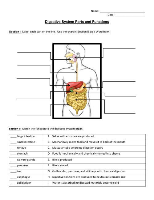 small resolution of 34 Label The Digestive System Worksheet Answers - Labels Database 2020