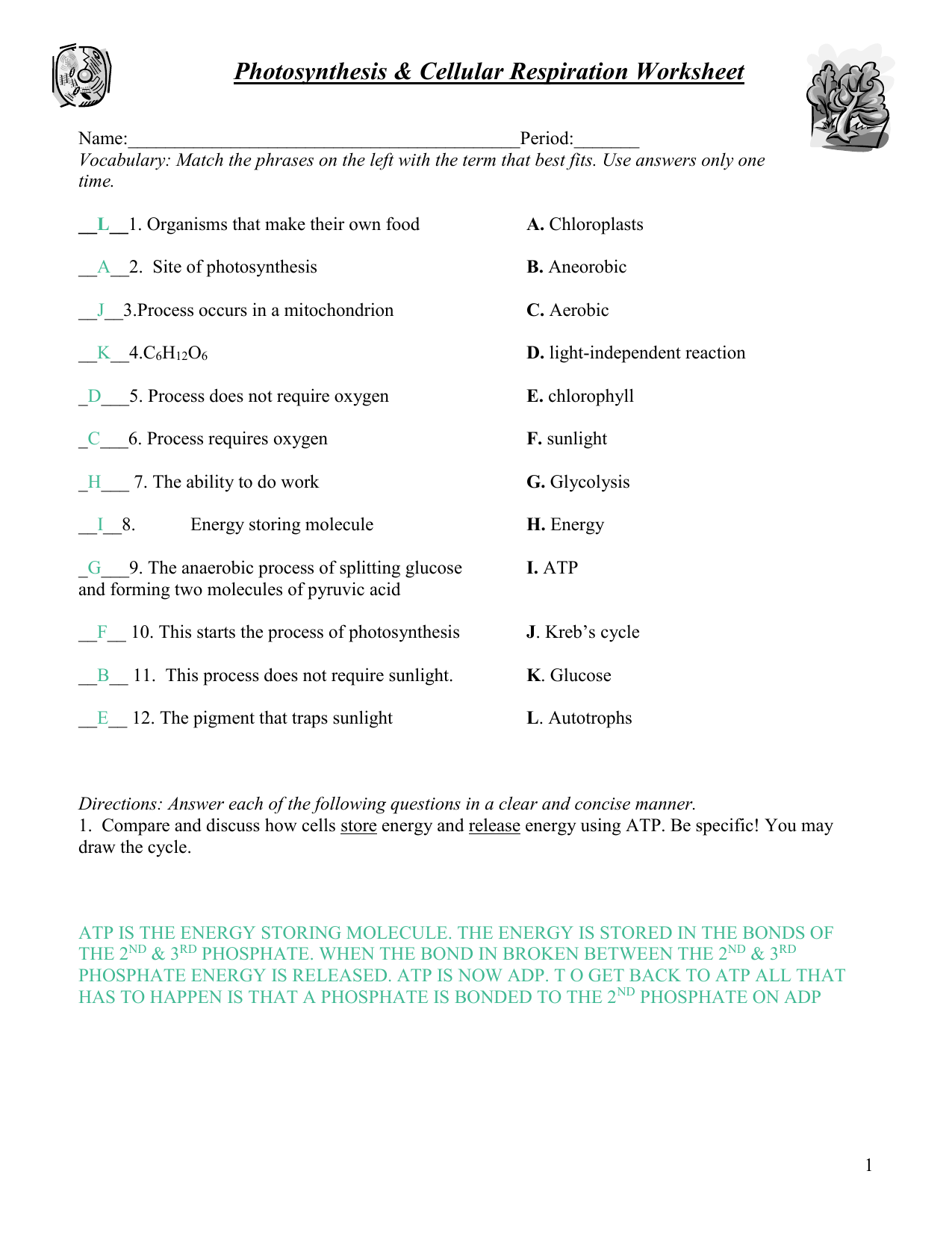 Key Photosynthesis Respiration Review Worksheet