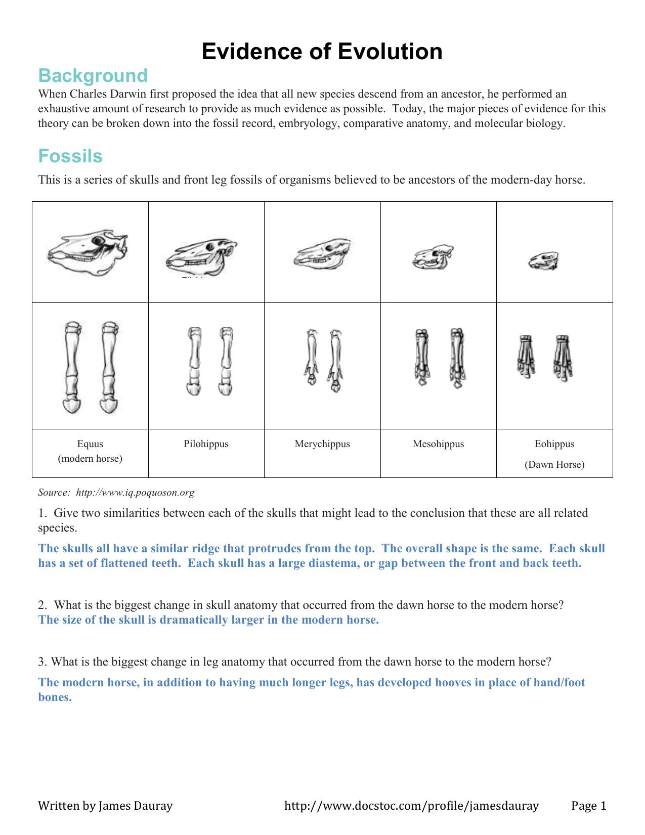 Embryology Worksheet Answers