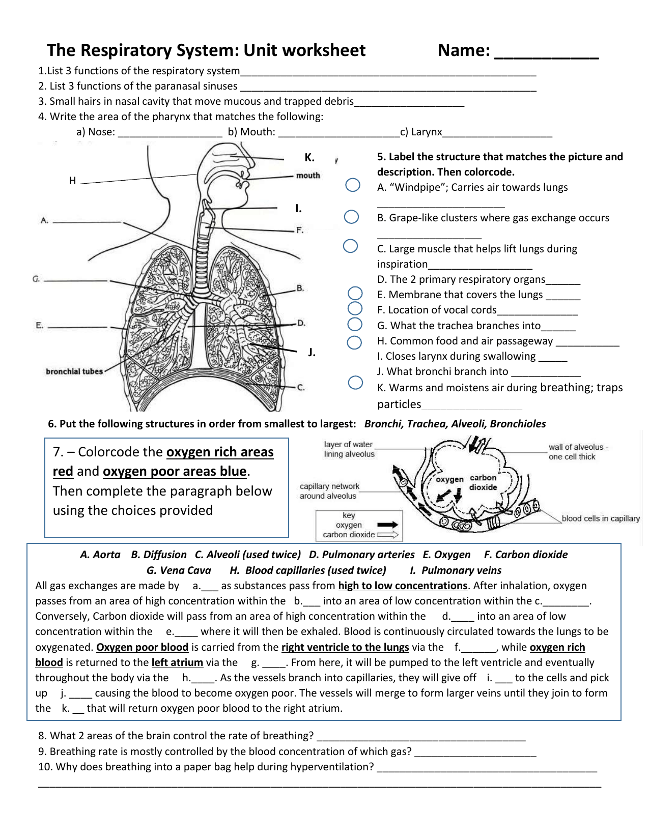 Respiratory Worksheet