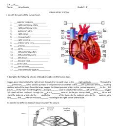 Ileanna Sofia Garcia - circulatory system worksheet [ 1951 x 1275 Pixel ]