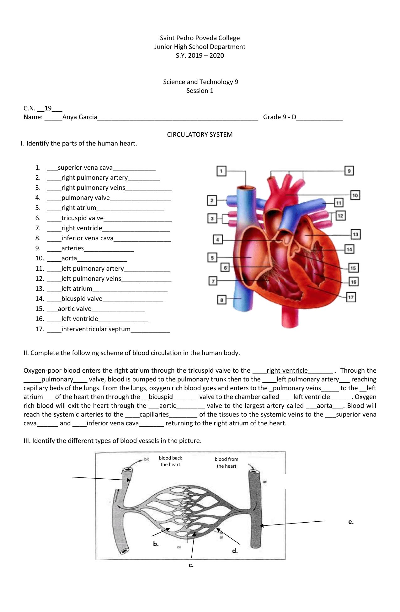 hight resolution of Ileanna Sofia Garcia - circulatory system worksheet