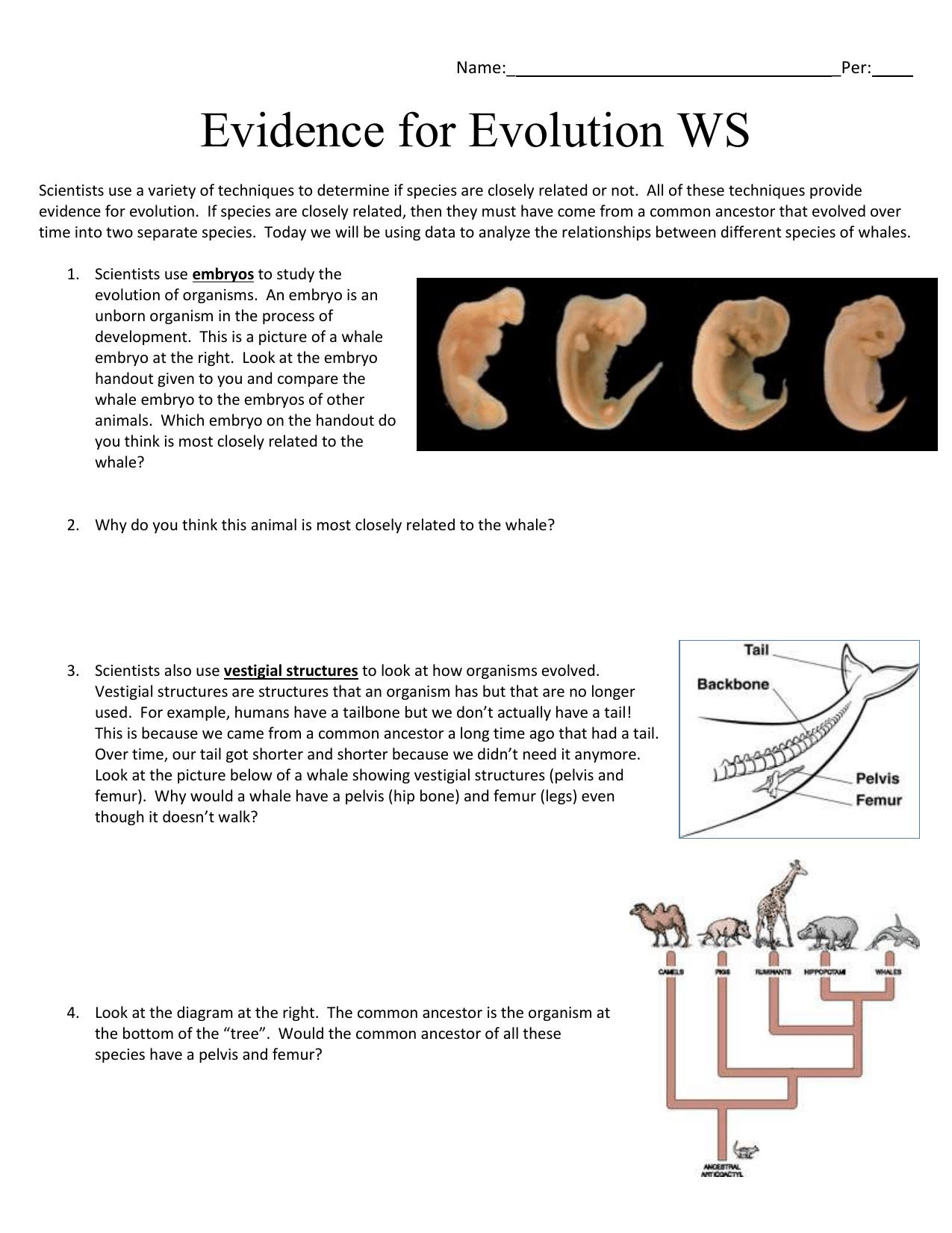 Evidence For Evolution Worksheet