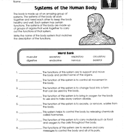Systems of the Human Body [ 1651 x 1280 Pixel ]