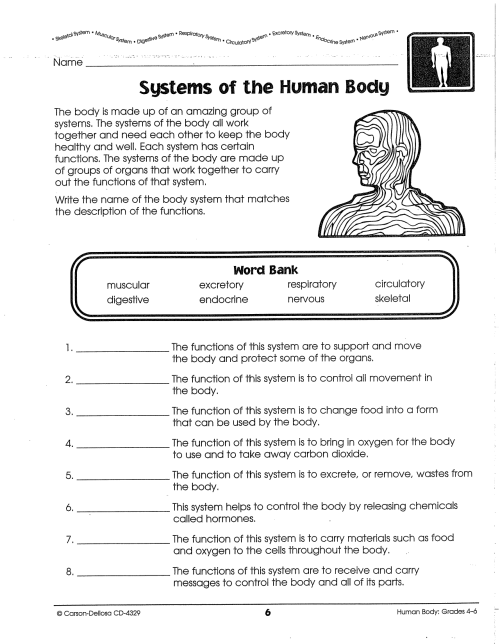 small resolution of Systems of the Human Body