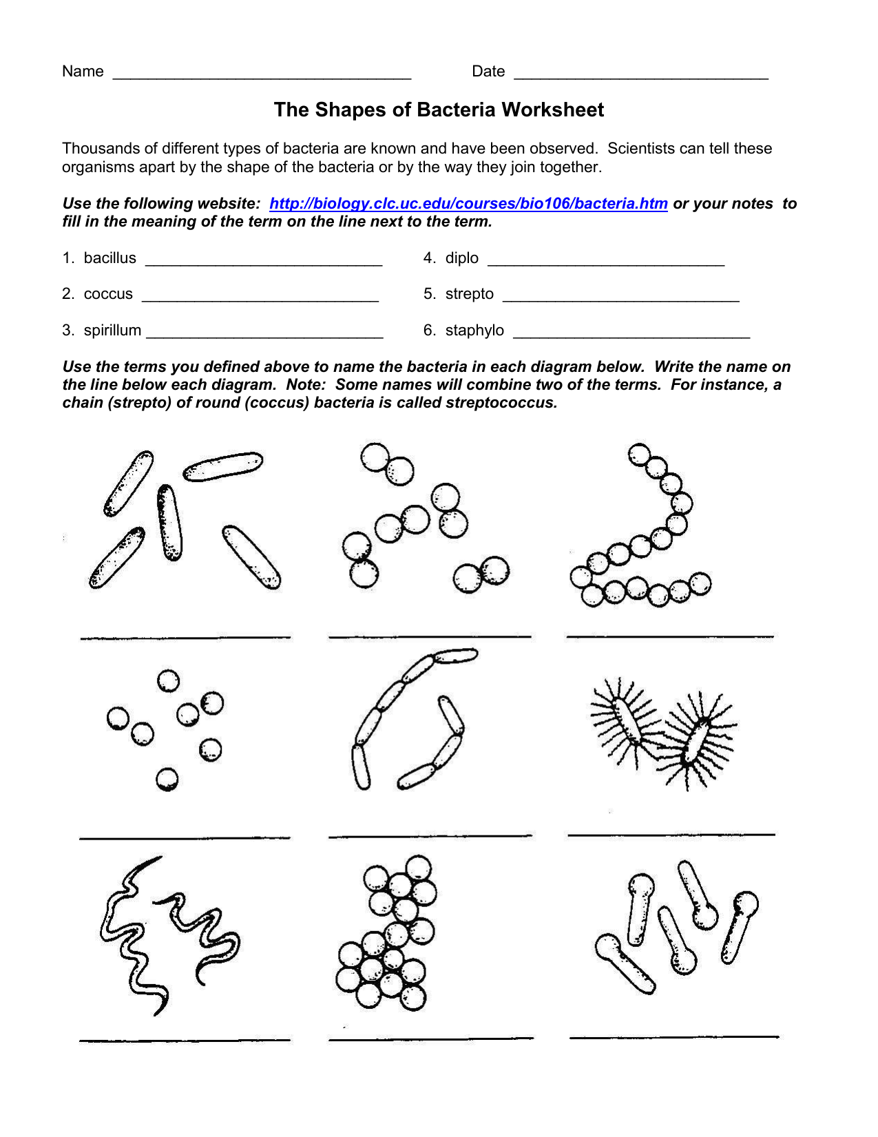 The Shapes Of Bacteria Worksheet