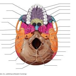 Axial Skeleton Skull Diagram 98 Gmc Jimmy Radio Wiring 3