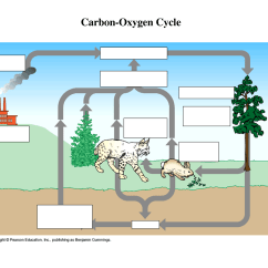Water Cycle Diagram Blank 1955 Chevy Truck Horn Wiring Worksheet Carbon Grass Fedjp