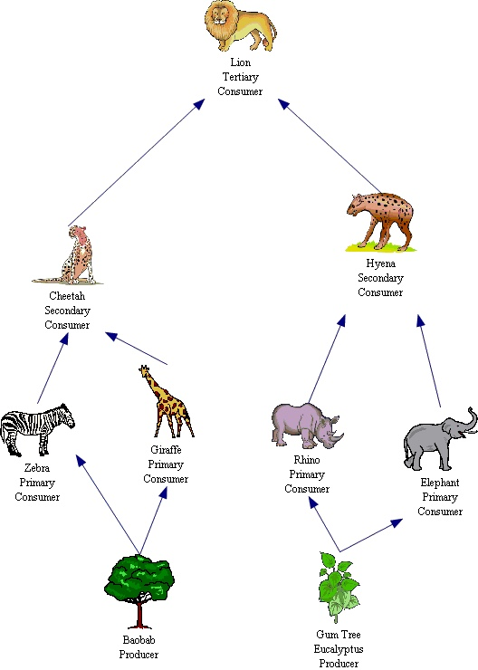 lion life cycle diagram towing wiring endangered elephant - thinglink