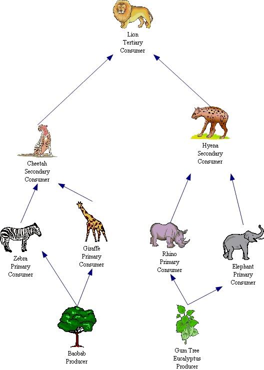 alligator food chain diagram multiple outlet wiring endangered elephant - thinglink