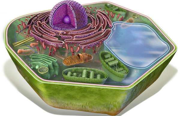 3d animal cell coloring diagram iron carbide phase explanation plant organelles diagrams great installation of wiring organelle review rh thinglink com worksheet printable