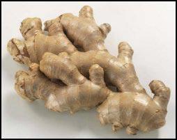 medicinal herbs ginger
