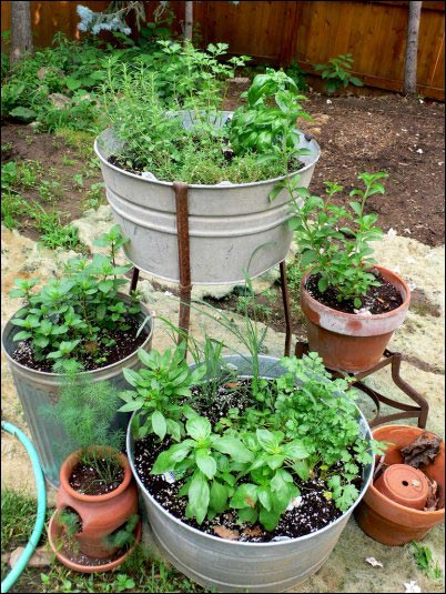 herb container garden, Designing an Herb Garden, herb garden design, homesteading, homestead, gardening