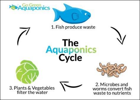 how aquaponics systems work