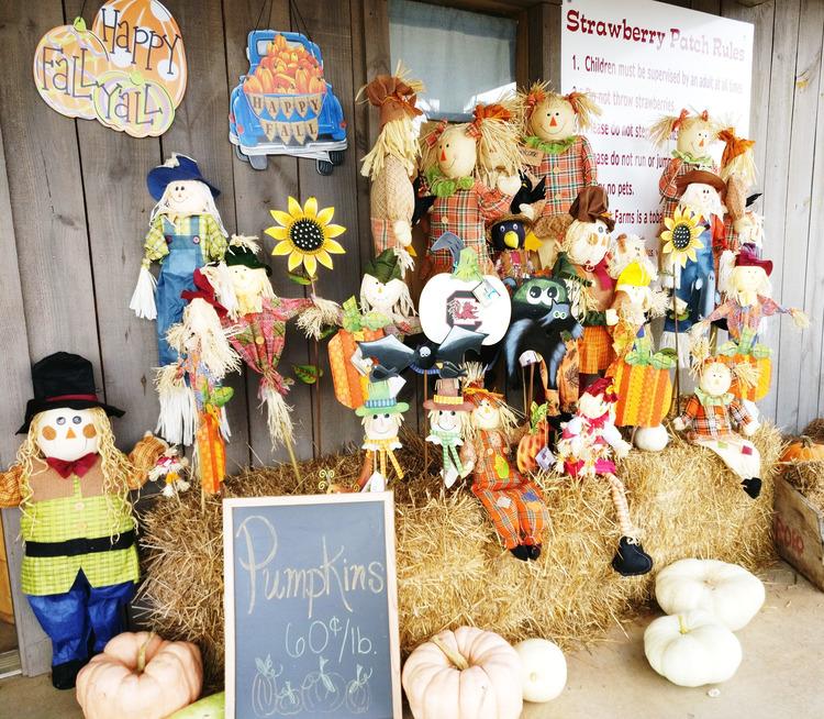 farm, pumpkin, patch, corn maze, wagon ride, bee farm, concessions, fun, diy, animal, fall, autumn, october, local, greenville, sc, stewart farms, food, store, shop, homemade, toddler, tradition, family, venture, holiday, halloween, 2017, parenthood, momblogger, momlife