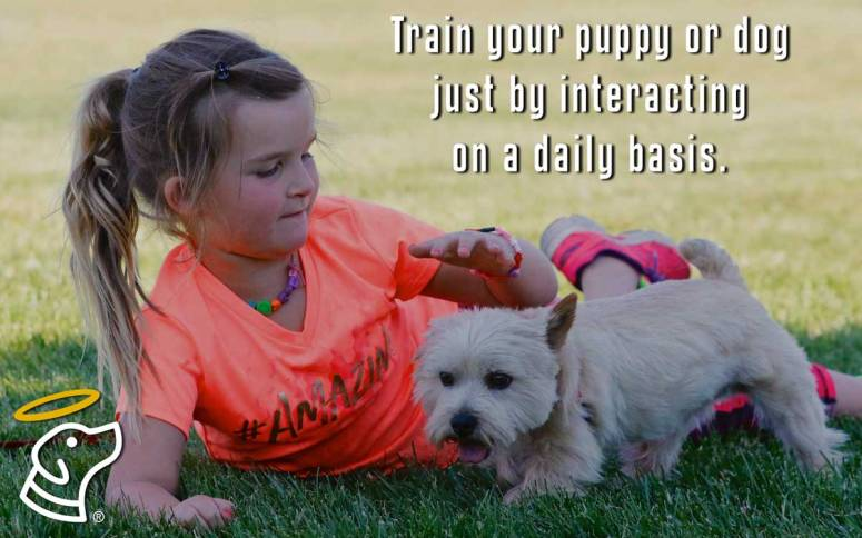 Train your puppy or dog just by interacting on a daily basis.