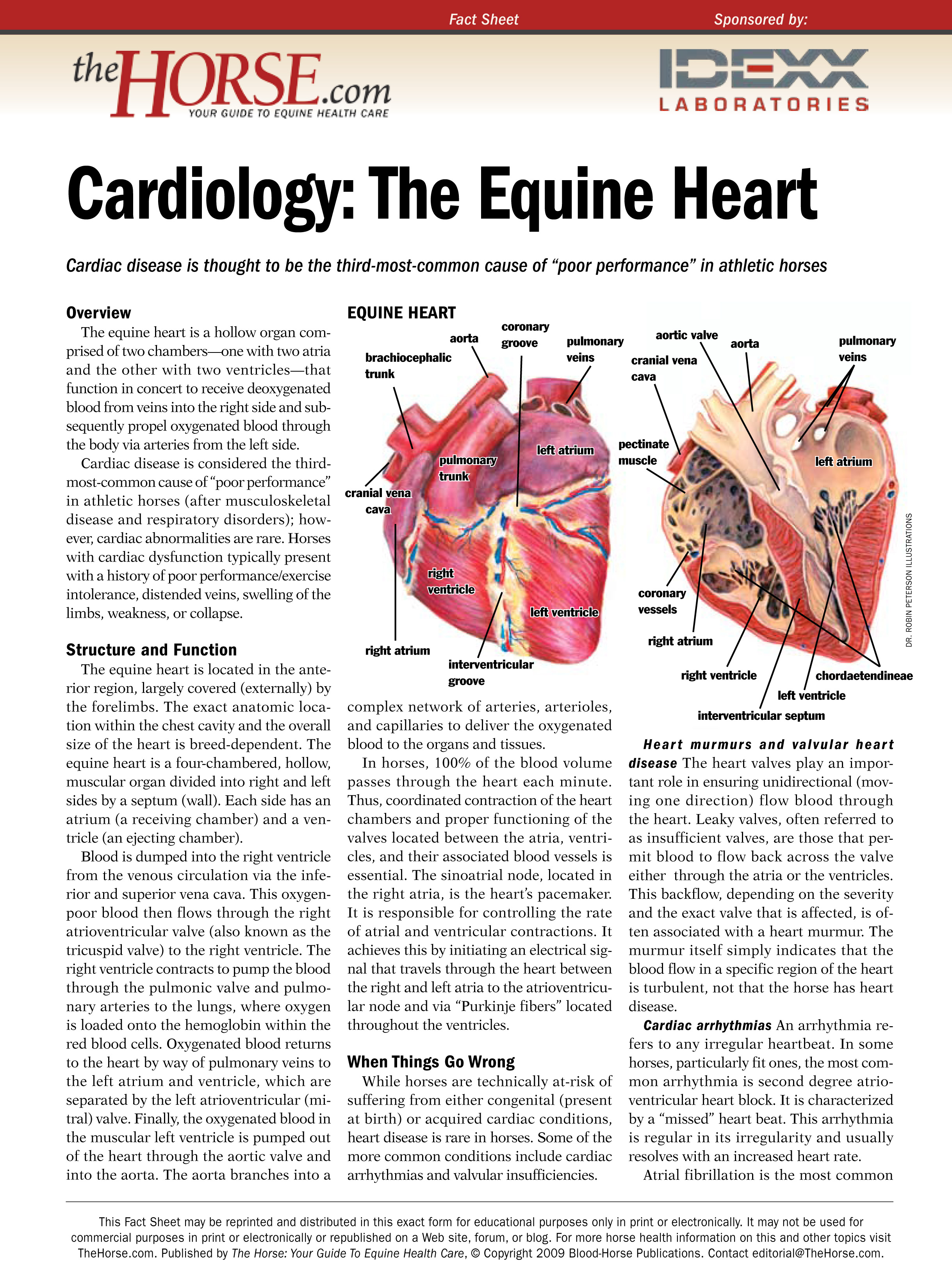 Cardiology The Equine Heart The Horse