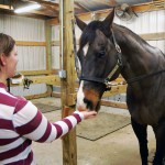 Horse Approved Homemade Treat Recipes The Horse