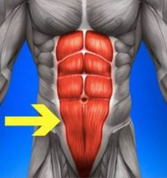 lower abs diagram arrow pointing [ 1200 x 801 Pixel ]