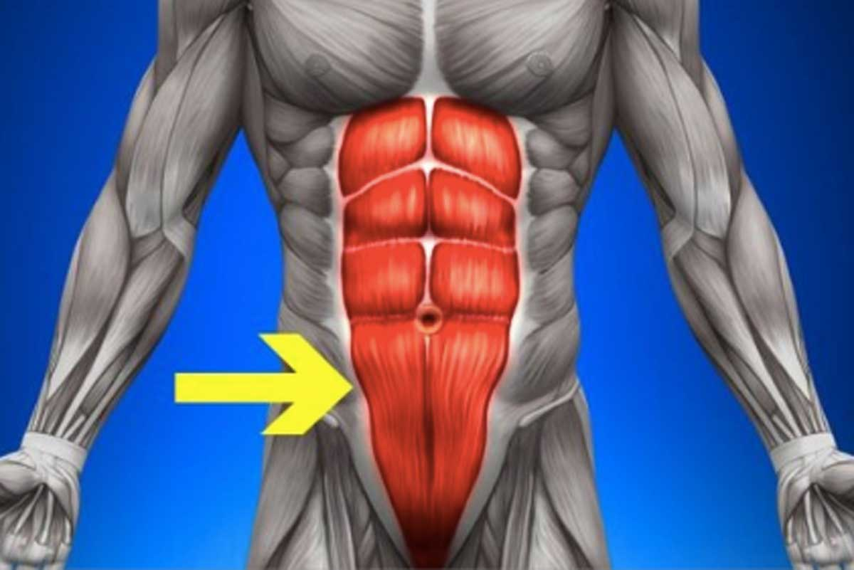 hight resolution of lower abs diagram arrow pointing