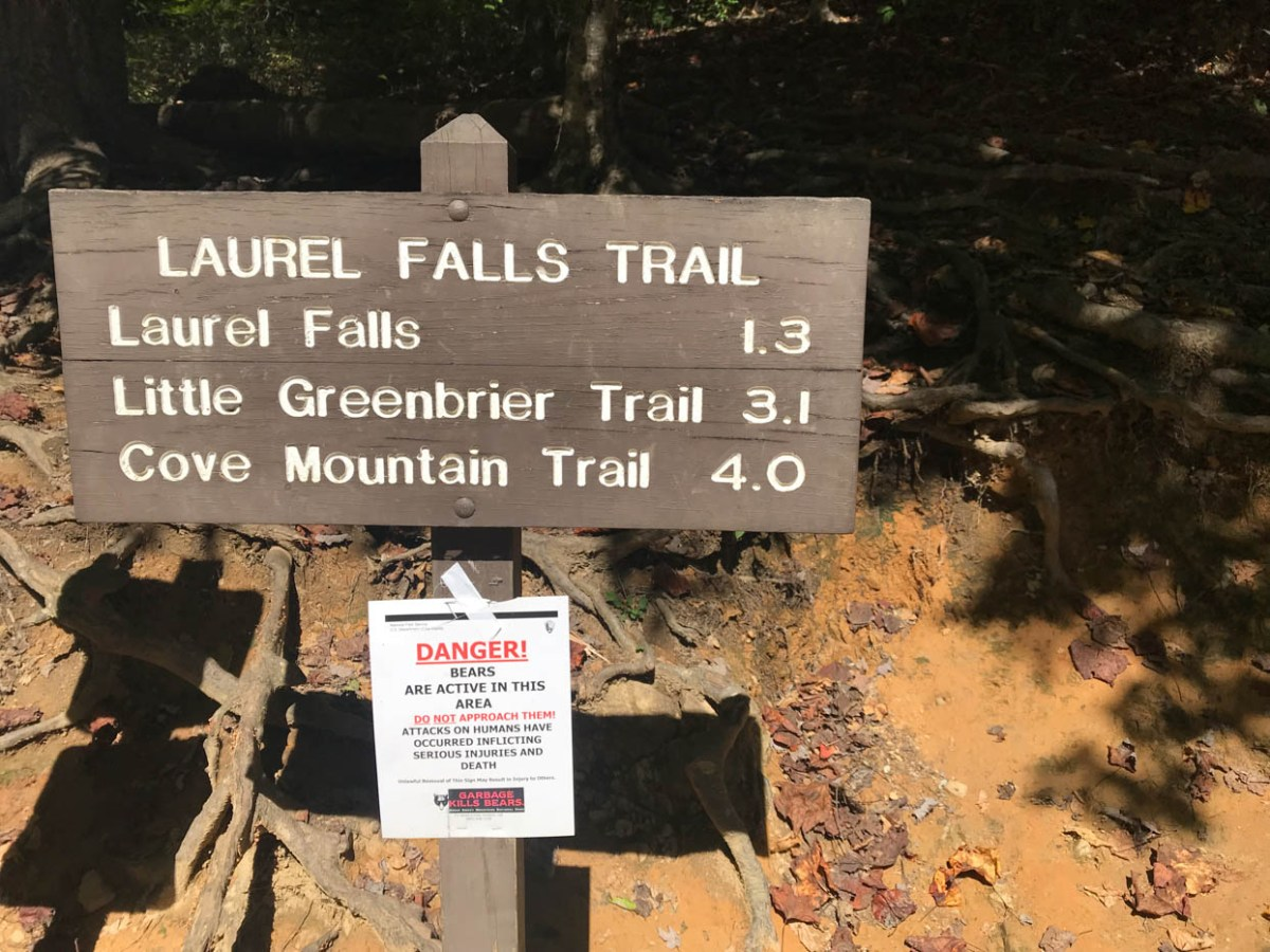 Laurel Falls Trail Trailhead at Great Smoky Mountain National Park #vezzaniphotography