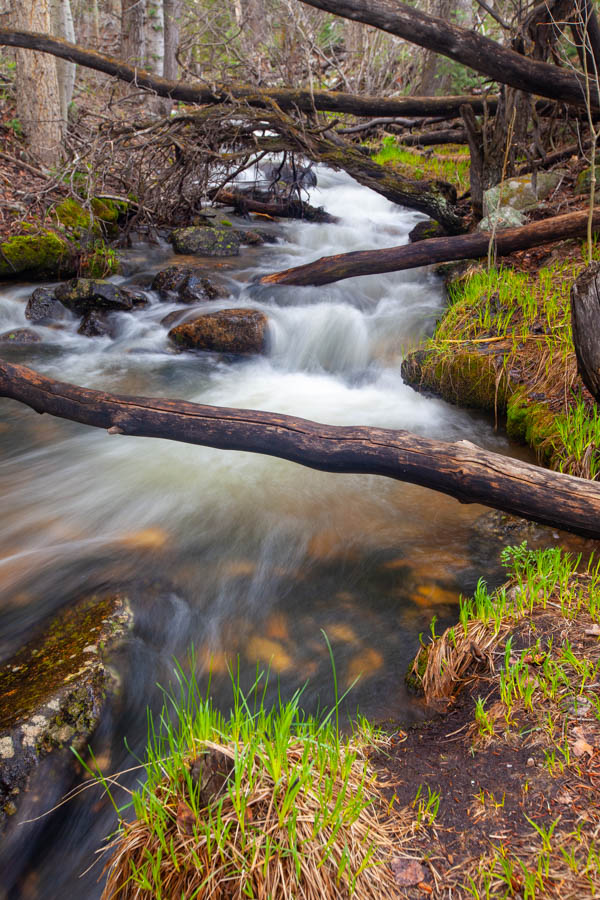 Baker Creek at Great Basin National Park #vezzaniphotography