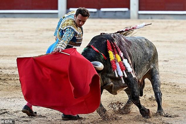 El torero español Antonio Ferrera pelea con un toro durante una corrida de toros en la Feria de Otoño en la Plaza de Toros de Las Ventas en Madrid.  Los niños menores de 16 años pueden tener prohibido ver el tradicional deporte de sangre según las reglas propuestas en España.