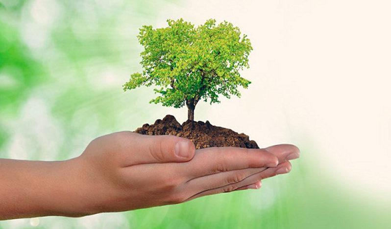 """Guatemala: El """"top 8"""" de buenas noticias para el medio ambiente ..."""