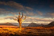 Dead Tree - Sunrise