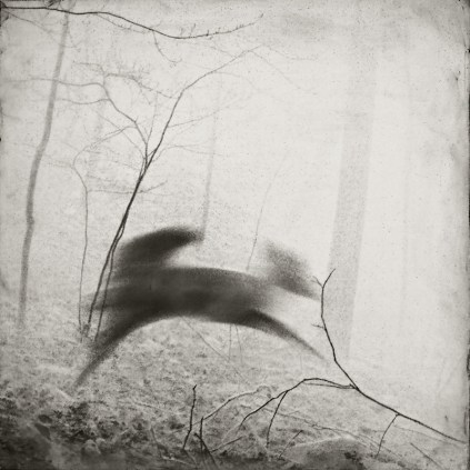 """Running Deer"", encaustic print, from the Hidden Worlds series"
