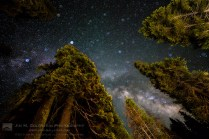 Night Sky and Trees, Yosemite