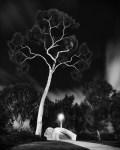 Dan-Hughes_balboa-tree-6460