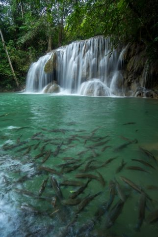 Kanchanaburi - Erawan National Park 1