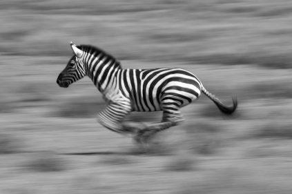 Tanzania - African Safari
