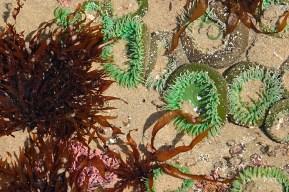 #1 - Sea Anemone