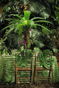 Wedding Reception Ideas: Tropical Rainforest #2125125 ...