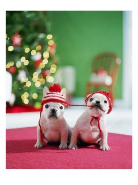 Christmas Wedding Gifts Christmas Puppies 2063849