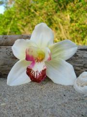orchid flower hair clip weddings